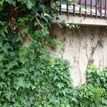 壁を這う草が及ぼす悪影響