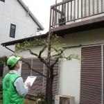 中古住宅の売却でホームインスペクションが義務化へ
