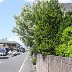【管理の現場から】庭木のお手入れはお早めに