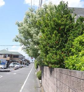 樹木の写真2