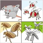 多数のねずみ、はえ、蚊、のみ等が発生し、地域住民の日常生活に支障を及ぼしている