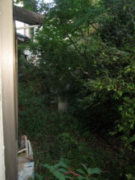 大きく成長した木が建物のすぐ近くで日光を塞いでしまっていました