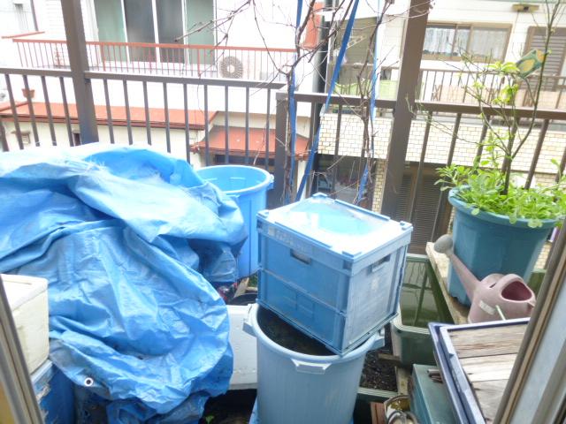 植物などが放置され、雨水がたまった状態のベランダ