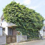 空き家の庭で「伸びきった雑草」が問題を引き起こす!?
